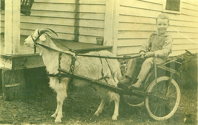 Uncle Travis, age 8, with his goat cart. If he only knew!
