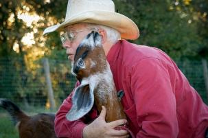 goats 068